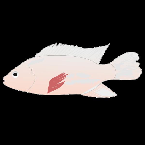 Download Tilapia Fish Logo Download Logo Icon Png Svg