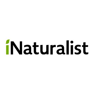 inaturalist ,Logo , icon , SVG inaturalist